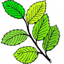 leaves-clip-art-leaves-clip